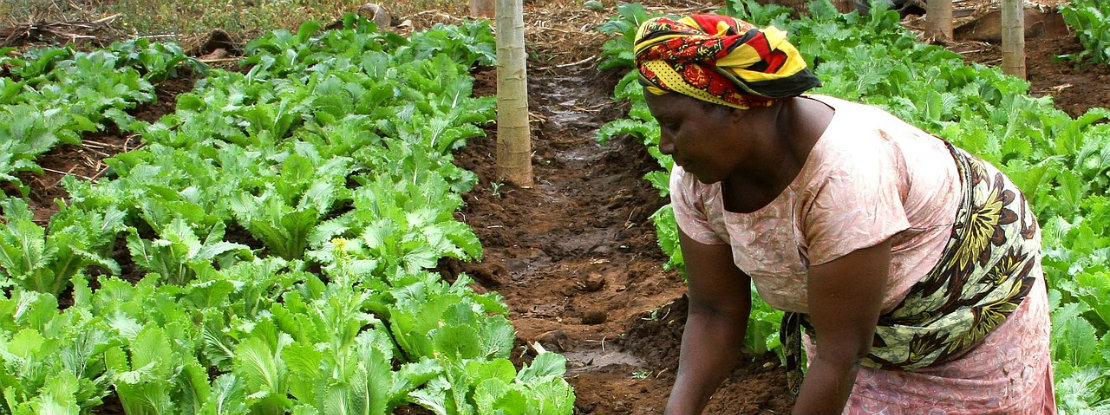 Mozambique Woman Planting Crops